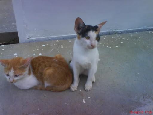 Kisah Kucing Jual Kucing Persia Halaman 7